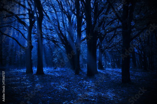 Night forest Poster