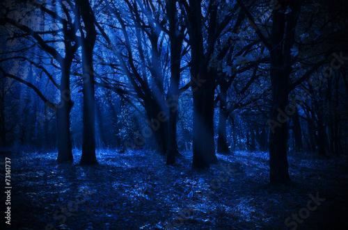 Fotografia  Night forest