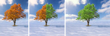 Collage - Single Tree Above The Clouds