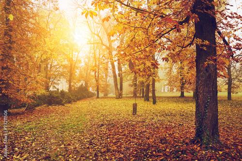 jesienny-park