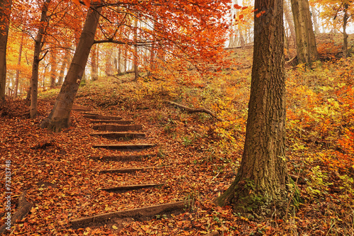 fototapeta na szkło Ścieżka las jesienią