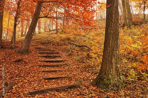 obraz lub plakat Ścieżka las jesienią