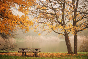 FototapetaBench autum park and lake