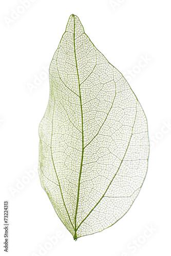 Tuinposter Decoratief nervenblad Decorative skeleton leaf isolated on white