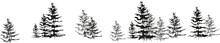Sketch Spruce,