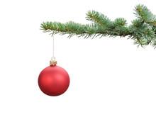 Red Satin Glass Ball Hanging On Christmas Branch