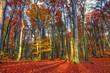 Krajobraz lasu jesienią w słoneczny dzień