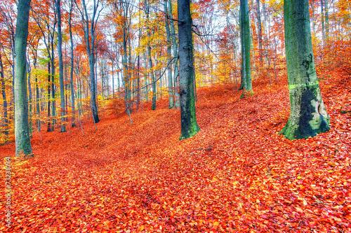 Foto op Canvas Baksteen Krajobraz lasu jesienią