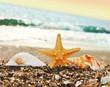 раковины на берегу моря