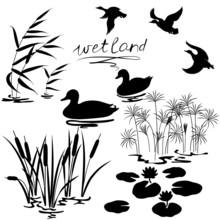 Wetland Plants And Birds Set
