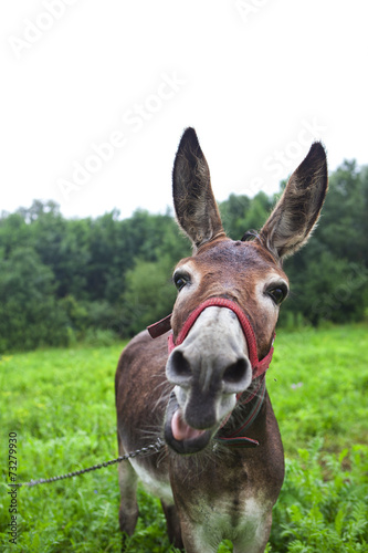 Deurstickers Ezel funny donkey
