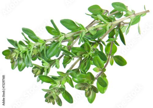 Fotografía  Green fresh thyme on white.