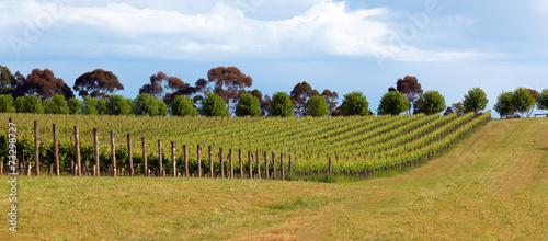 Foto op Canvas Australië Vineyard in Yarra Valley, Australia