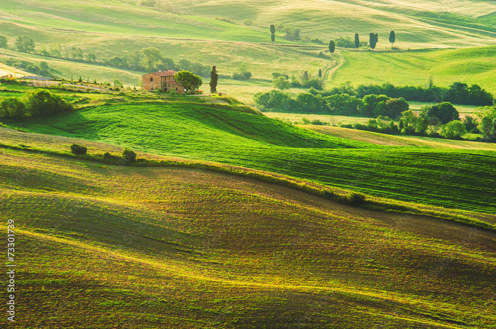 Fototapety, obrazy: Spring field around Pienza, on the road between Siena and Rome
