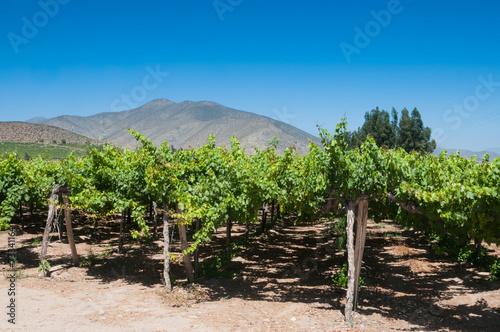 Papiers peints Amérique du Sud Vineyard in the Elqui valley, Chile