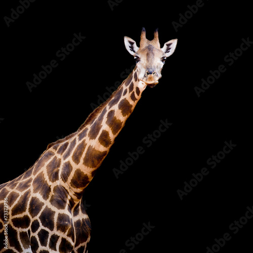 Papiers peints Girafe close up giraffe