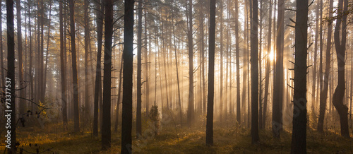 Fototapeten Wald Sunrise in forest