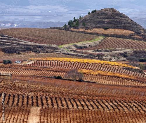 Late autumn in La Rioja vineyards.