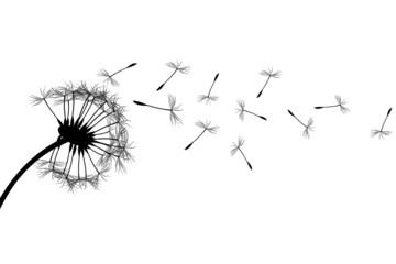 Fototapeta Dandelion silhouette