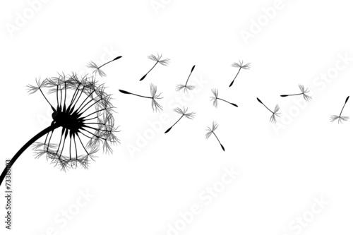 Fotografie, Obraz  Dandelion silhouette