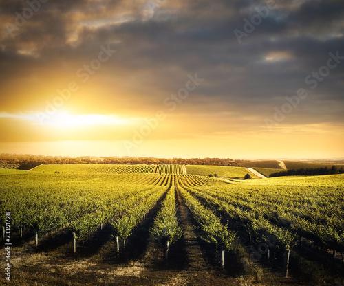 Garden Poster Vineyard Vineyard Beauty