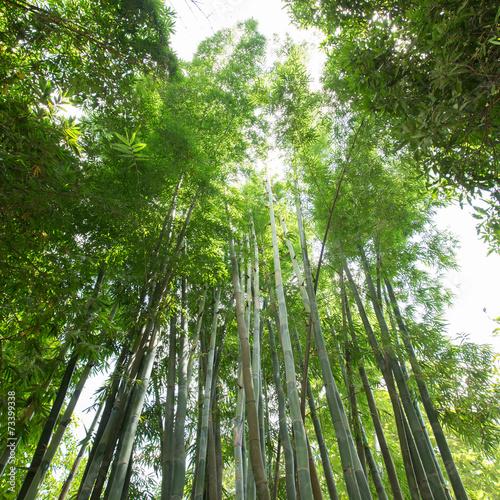 Poster de jardin Bambou bamboo forest