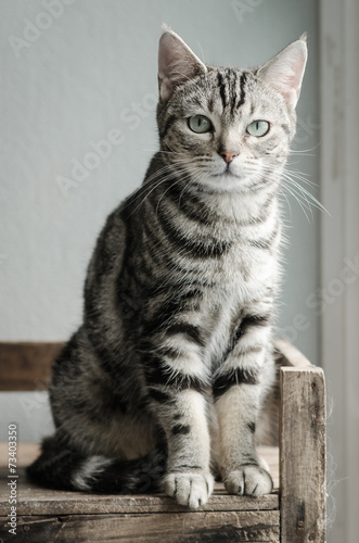 Obraz na plátne Cute tabby cat sitting and looking