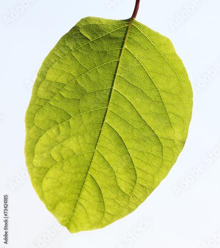 Tuinposter Decoratief nervenblad Grünes Blatt mit deutlich sichtbarer Struktur