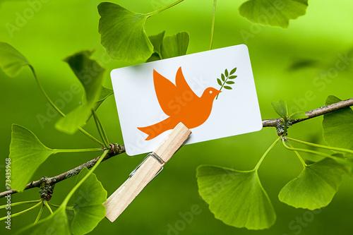 Fotografia  Dove of Peace