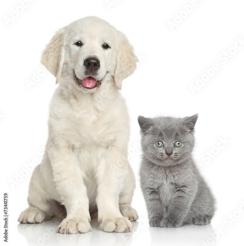 Cat and dog together Wallpaper Mural