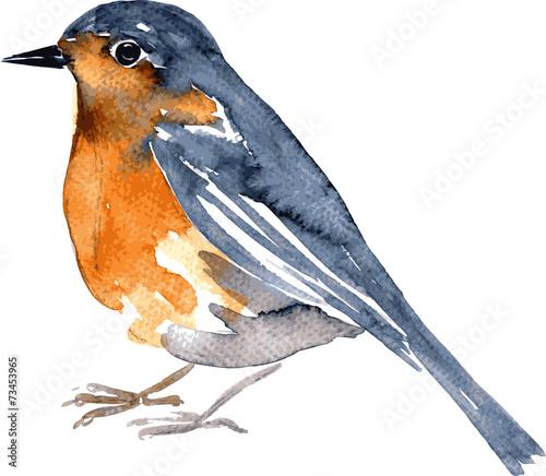 Photo watercolor drawing bird