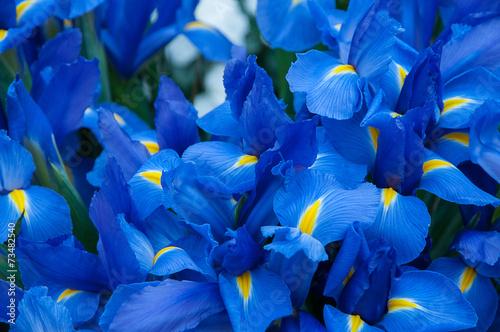 Deurstickers Iris Iris