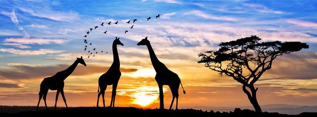 Fototapeta Żyrafa safari por el atardecer de africa