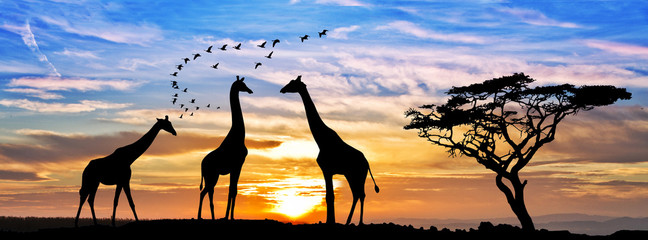 Panel Szklany Podświetlane Żyrafa safari por el atardecer de africa
