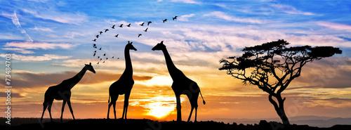 safari por el atardecer de africa