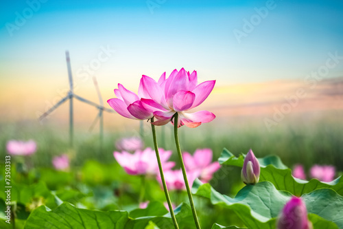 Garden Poster Lotus flower lotus and wind turbine