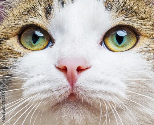 Fototapety, obrazy: a green cat eyes close up