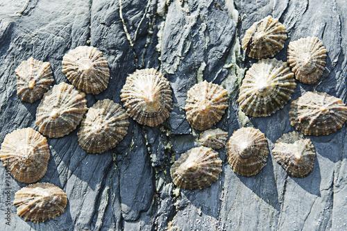 Seashells on rocks Canvas Print