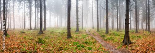 Nebel im Wald #73539103