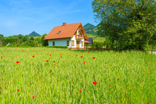 Traditional House On Green Field In Pieniny Mountains, Poland