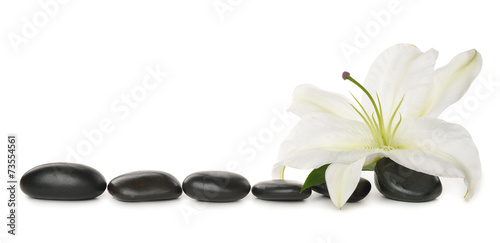 Photo  White lily and stones