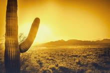 Saguaro Cactus Tree Desert Lan...
