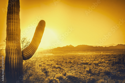 Spoed Foto op Canvas Arizona Saguaro cactus tree desert landscape, Phoenix, Arizona.