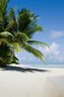 Green tree on white sand beach. Kuramathi island