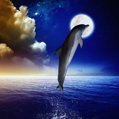 Fototapeta Delfin Dolphin and moon