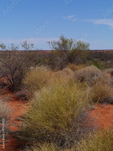 Foto op Canvas Australië Soft spinifex plants in the red desert of Australia