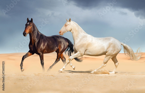Photo  Group of two horse run on desert against beautiful sky