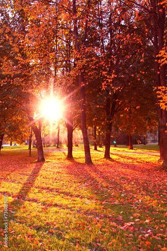 Fototapeta Forest View Park View obraz na płótnie