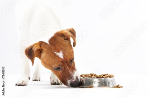 Fotografie, Obraz  Sucha karma, zdrowa dieta psa