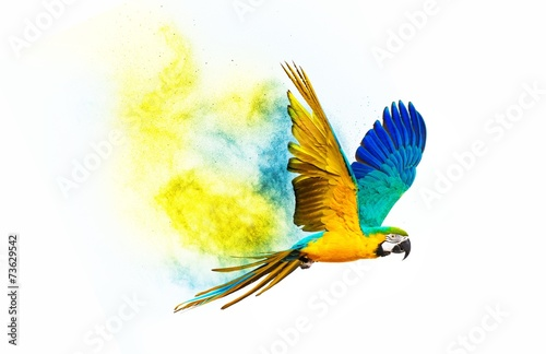 Fond de hotte en verre imprimé Perroquets Colourful flying parrot isolated on white